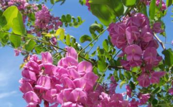 arbres plantes fleurs et jardin l 39 encyclop die compl te. Black Bedroom Furniture Sets. Home Design Ideas