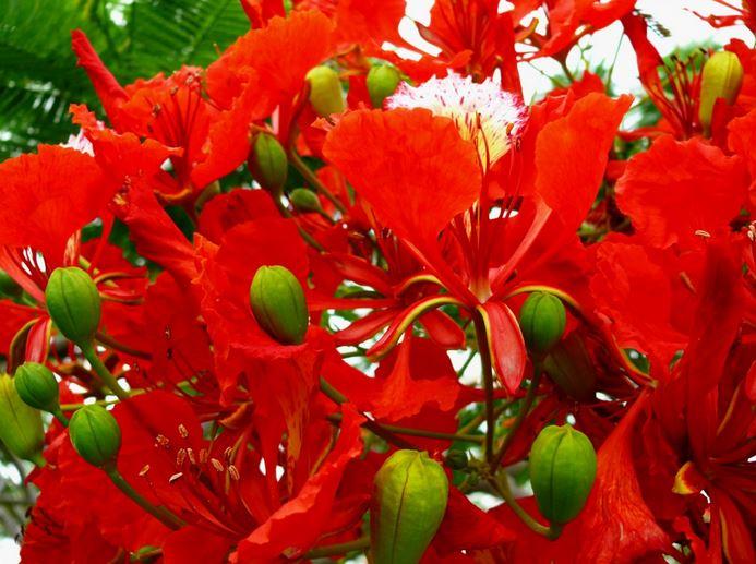 Les Plus Beaux Arbres A Fleur Et Aux Plus Belles Floraisons