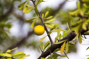 Branche, Arbre, Nature, Feuille, Plante